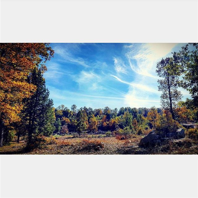 @tatiana_chahine nature hikingadventures hike beauty colorfull trees... (غابة العذر)