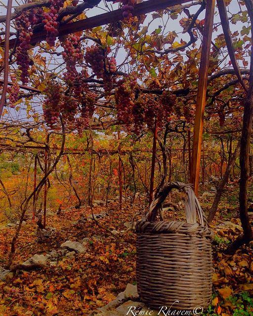 ~ autumn autumnleaves autumncolours 🍂🍇🍂🤠💆🏻~ (Jezzîne, Al Janub, Lebanon)