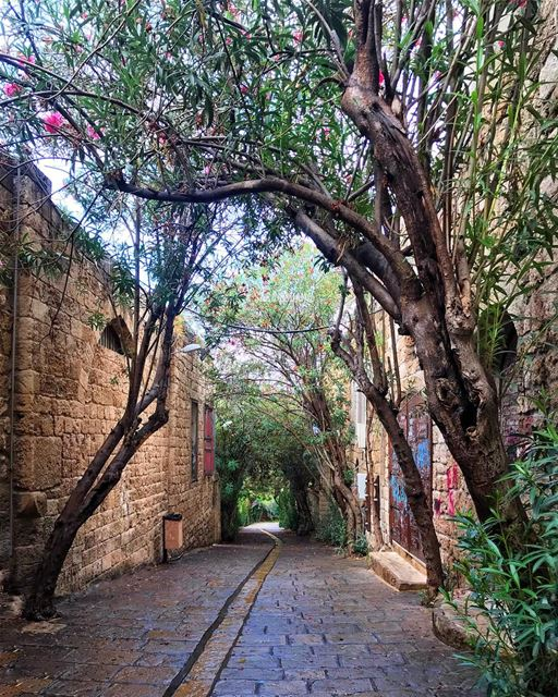 This is the oldest city in the world! My charming Byblos 🍂🍃 (Byblos - Jbeil)