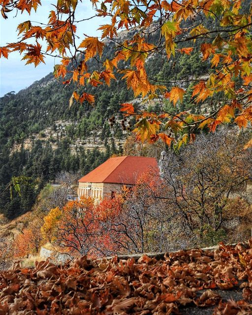 Happy Sunday! It's been a while since I've shared with you my native... (Ehden, Lebanon)