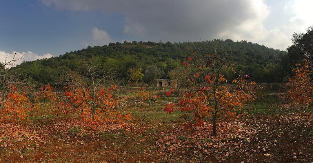 🧡...... lebanonspotlights thisismycommunity nationalart ... (Jebrâyel, Liban-Nord, Lebanon)