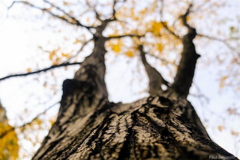 autumn tree leaf season nature naturephotography outdoors hiking ...