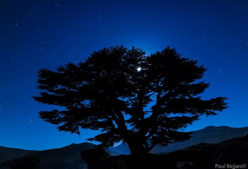 cedars tree tannourine stars lebanon naturalreserve night moon ...