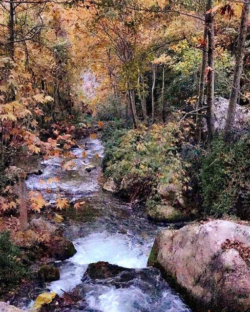 Untouched place 🍂 fallriver 🍁 sanesundays 🌾 sanelebanon 🍃 (`Akkar, Liban-Nord, Lebanon)
