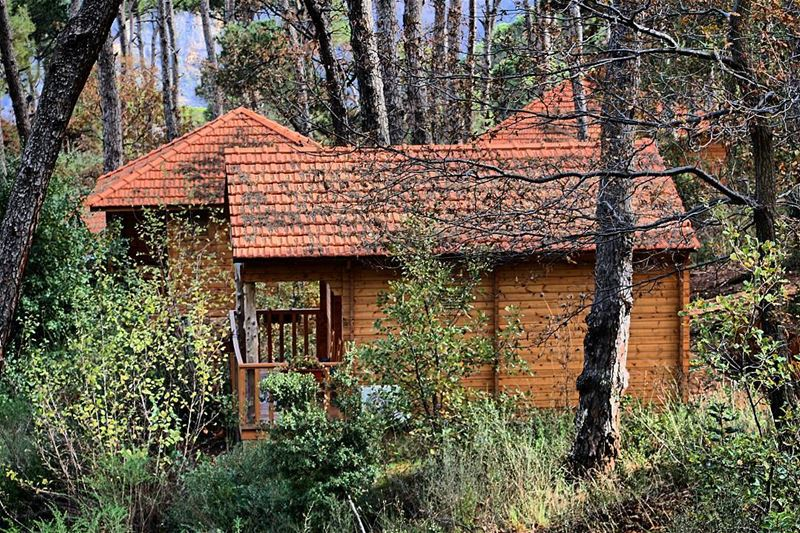 Deep into the woods 🏡 LaMaisonDeLaForet Bungalow Woods Forest Pine ... (Bkâssîne, Al Janub, Lebanon)