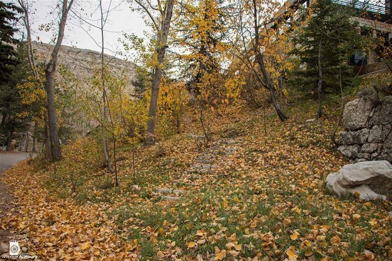 autumn autumn🍁 autumnleaves autumninlebanon ehmej takenbywissamalhoury... (Ehmej, Mont-Liban, Lebanon)