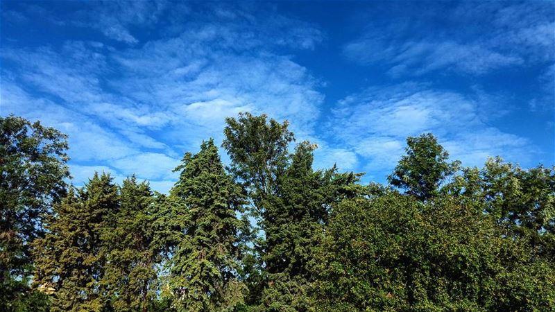 Fairy tale Lebanon pine sky clouds liban nature scene scenery ... (Lebanon)