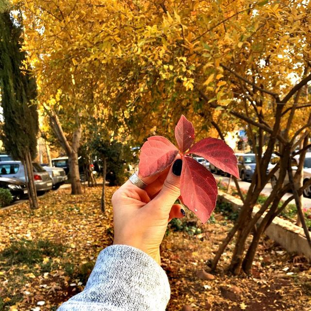 A Leaf Speaks Bliss to me...🍁🍂🍁🍂...