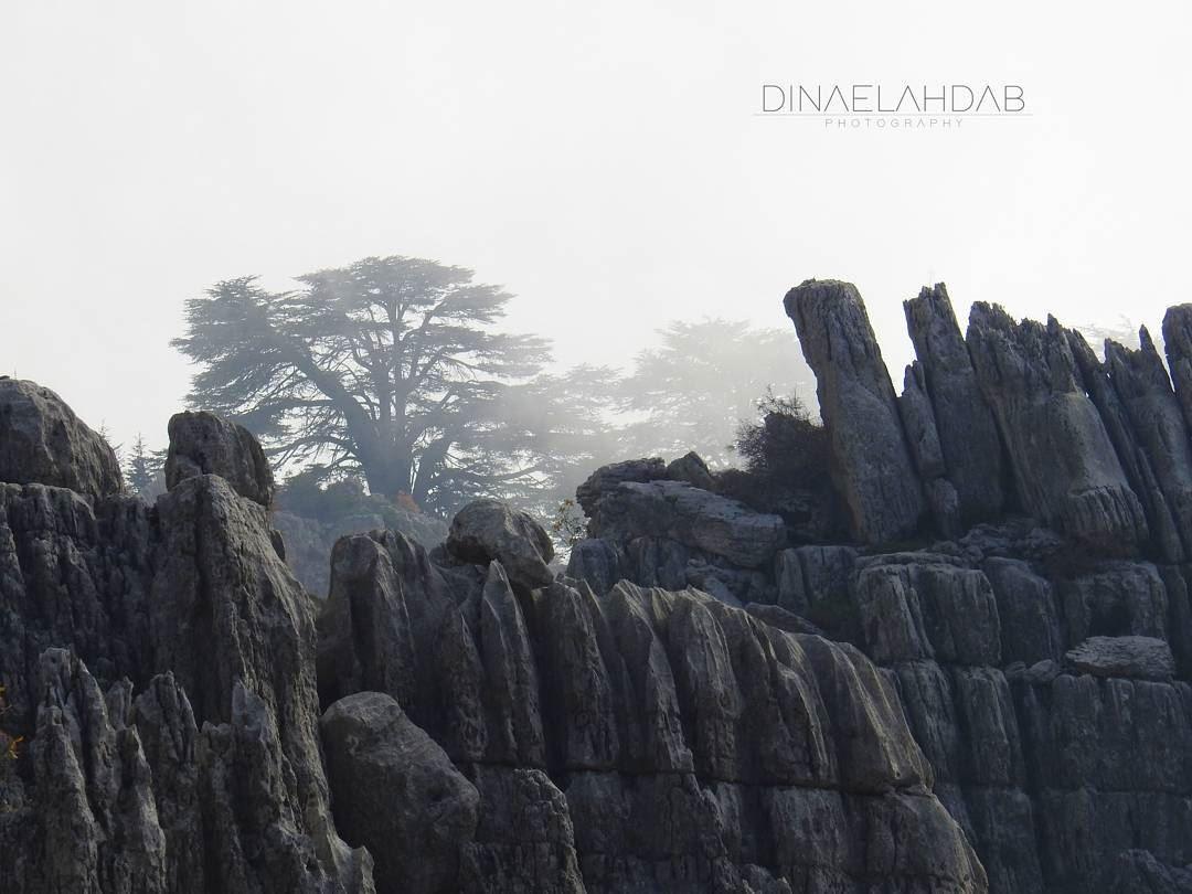 Il agonise seul dans l'angoisse..._______ 961lens naturephotography ... (Jaj, Mont-Liban, Lebanon)