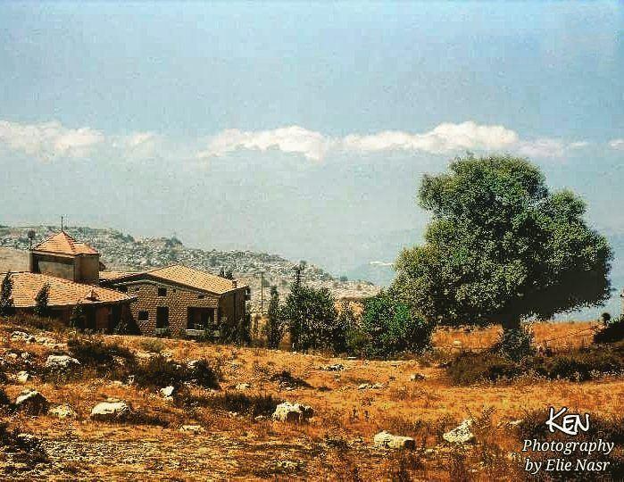 ...وبعدن ايدينا من سنين بشجرة الكينا معلمينوتحت الشجر هاك الحجار اللي ج (Qanat Bakish, Mont-Liban, Lebanon)