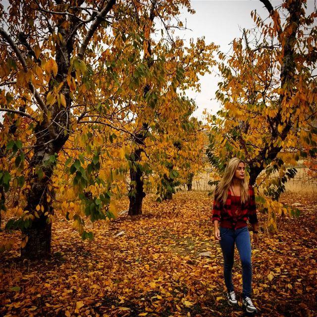 Necessary Autumn Picture: Check. LastAutumnLeaves 🍁 (El Laqloûq, Mont-Liban, Lebanon)
