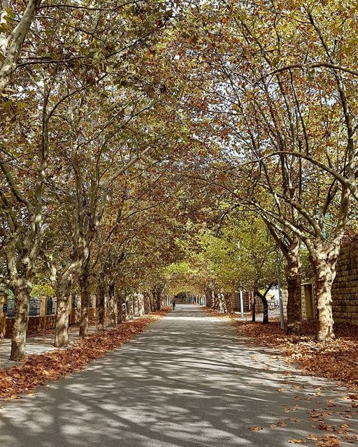 It's not about the destination; it's about the journey.🍁🍂 ... (Sawfar, Mont-Liban, Lebanon)