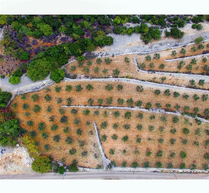 Olive season📍Masrah, Batroun , Lebanon | 2017..━ ━ ━ ━ ━ ━ ━ ━ ━ ━ ━ ━ (Masrah, Mont-Liban, Lebanon)