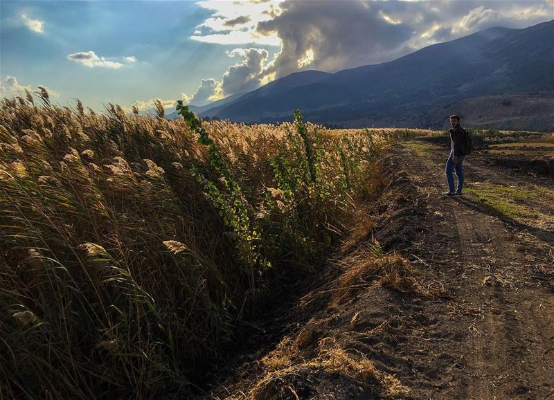 The Golden season 🌾 ______________________________________... (`Ammiq, Béqaa, Lebanon)
