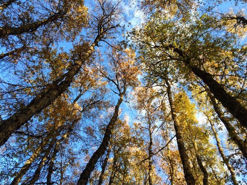 Hiking Qamoua - Fnaydek Iron Oak Forest - Wednesday 22 November 2017- ...