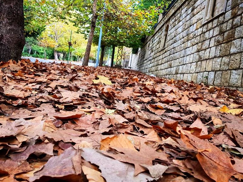 autumn leaves carpet 🍁🍂🍁 sawfar corniche fall leaveschanging ... (Sawfar, Mont-Liban, Lebanon)