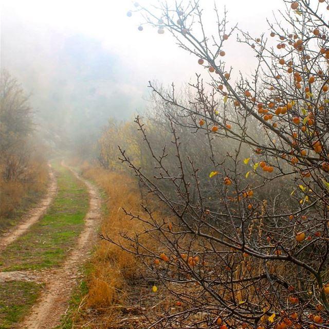Beyond the fog lies clarity. lebanon lebanese lebanon_hdr ... (Horsh Ehden)