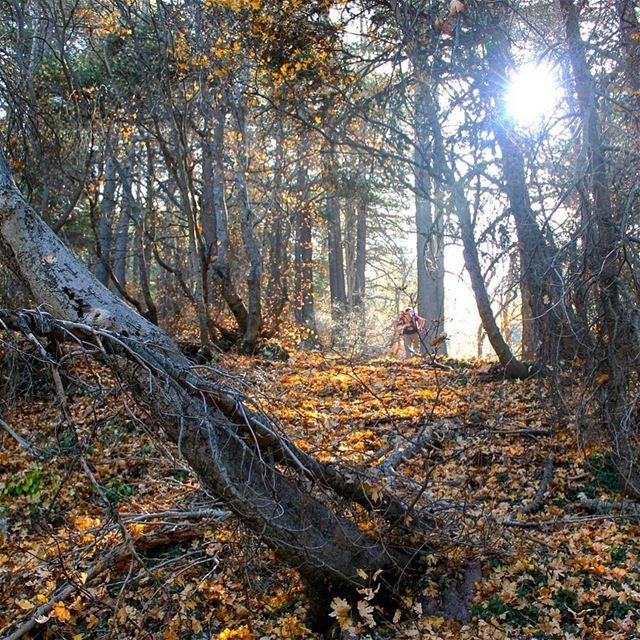 A golden hike... lebanon lebanese lebanon_hdr livelovelebanon ... (Horsh Ehden)