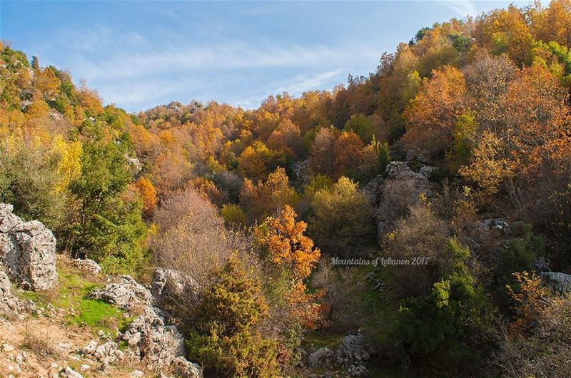 The perfect fall golden colors mixed with some greens and a blue sky! ... (Ehmej, Mont-Liban, Lebanon)