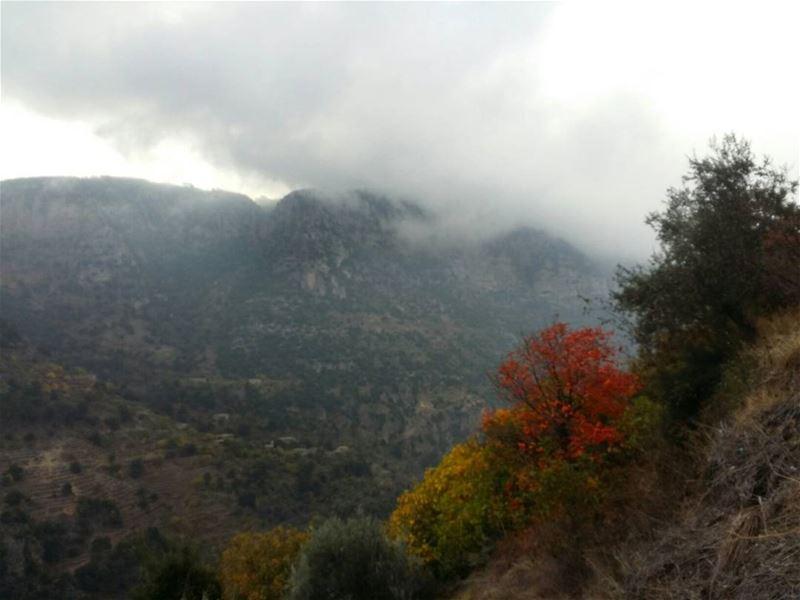 lebanon lebanoninapicture beautifullebanon ig_lebanon nature ... (Lebanon)