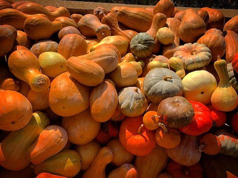 Pumpkin 🎃 natureoftheplanet1 lebanoninapicture yourlifeoutdoors ... (Adonis Valley)