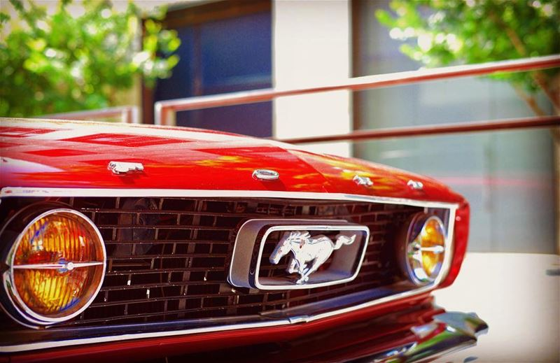 FORD Mustang 1966 - collection car ford fordmustang red mustang ...
