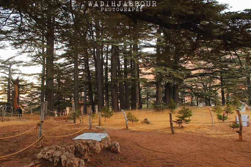 🔹🔹🔹🔹🔹 insta_lebanon igpowerclub Super_Lebanon ig_lebanon ... (The Cedars of Lebanon)