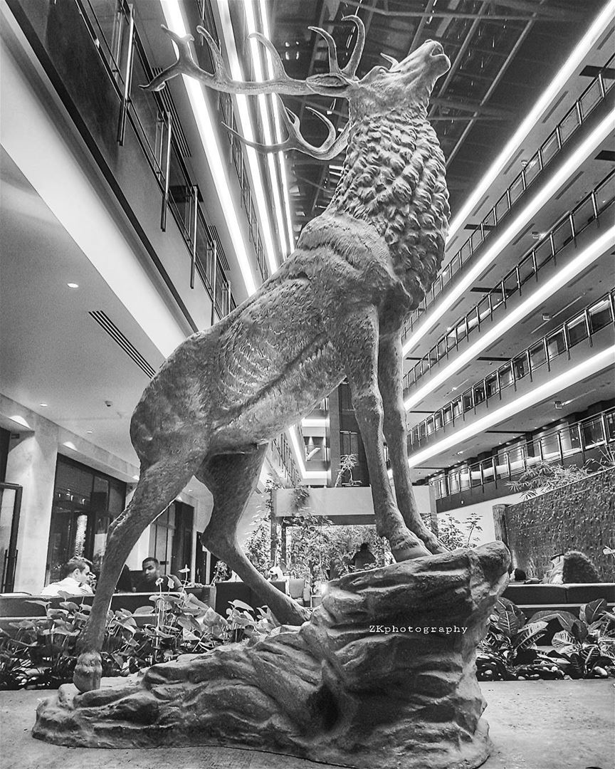 Dinner.. with the Deer 🦌😁 * bnw bnw_captures bnw_planet bw ... (The Westin Doha Hotel & Spa)