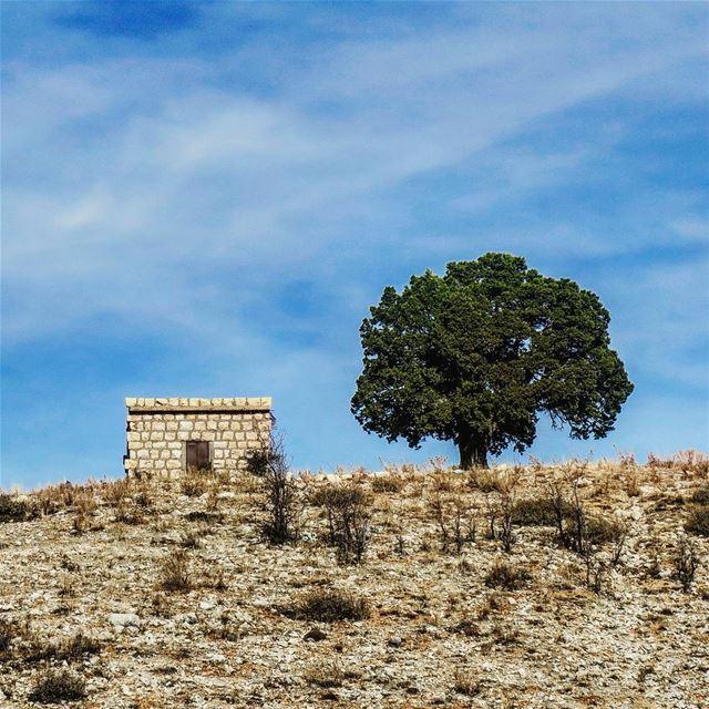 تغدّيني جبنة وزيتونة وتعشّيني بطاطا tree house hill arid mountain ... (Horsh Ehden)