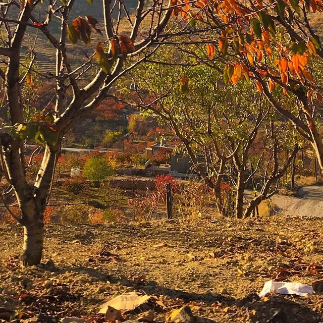 Autumn is a second spring when every leaf is a flower 🍁 livelovelebanon ....