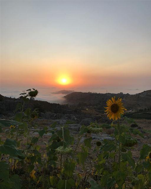 FARAYA 🌄 mountains faraya sunset nature lebanon ⛅️🌻🌤 (Faraya, Mont-Liban, Lebanon)