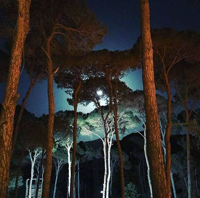 Nights in the forest are really marvelous 🌚🌳🌳 LaMaisonDeLaForet Pine ...