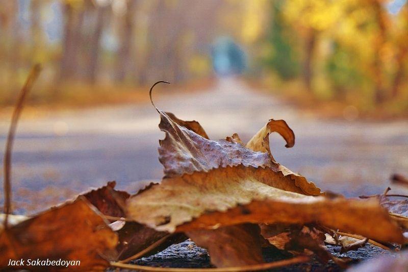 Autumn in Laqlouq laqlouq laklouk jbeildistrict autumn🍁 leaves ...