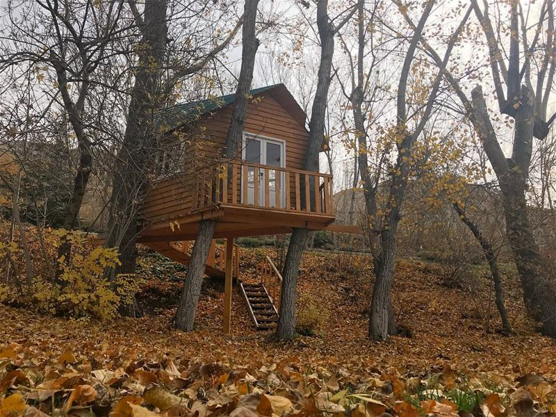 Let's give up on society and build treehouses instead 😍😍