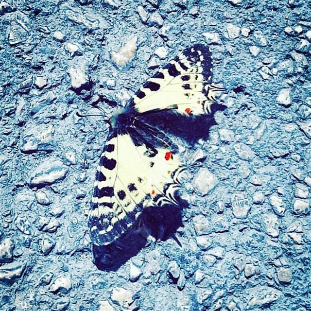 Butterflies are the heaven sent kisses of an angel 🦋🍃.Huawei P10 📷.... (جونية - Jounieh)