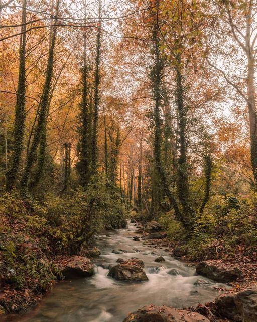 🍁🍂..... river autumn trees forest rocks landscape... (Wadi Qannubin, Liban-Nord, Lebanon)