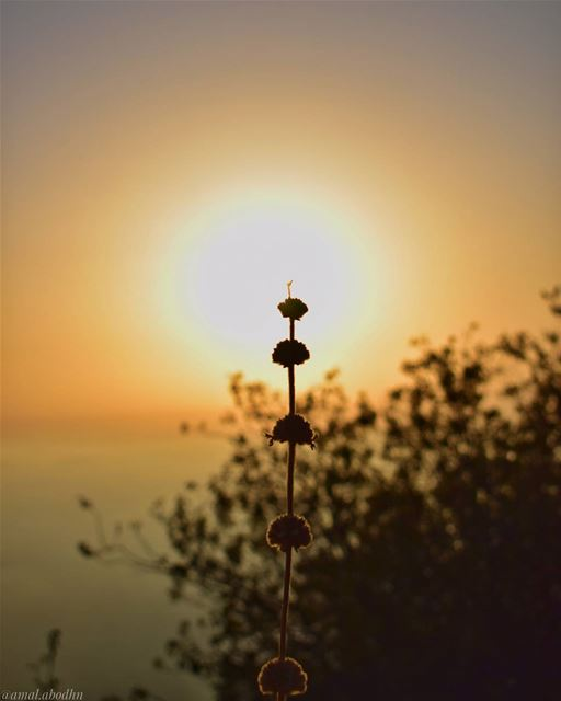 اتقن القواعد كمحترف،، حتى تتمكن من كسرها كفنان 👌 lebanon photography ... (Al Shouf Cedar Nature Reserve)