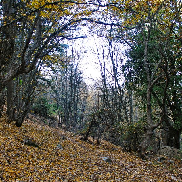 Autumn shows us how beautiful it is to let things go. lebanon lebanese ... (Horsh Ehden)