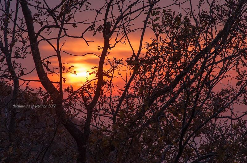 Hazy sunset from behind the fall barren oak trees of Ehmej sunset ... (ehmej ;jbeil)