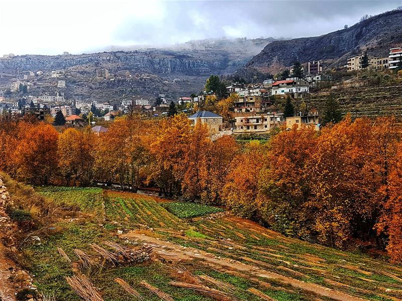 On the outskirts of Faraya Village beautiful colors superb autumn ... (Faraya, Mont-Liban, Lebanon)