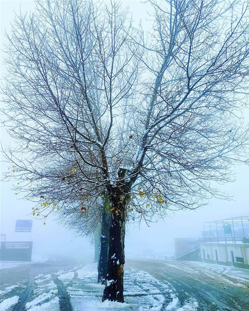 Even naked trees can look good with a light coat of snow ❄ early snow ... (Mzaar Kfardebian)