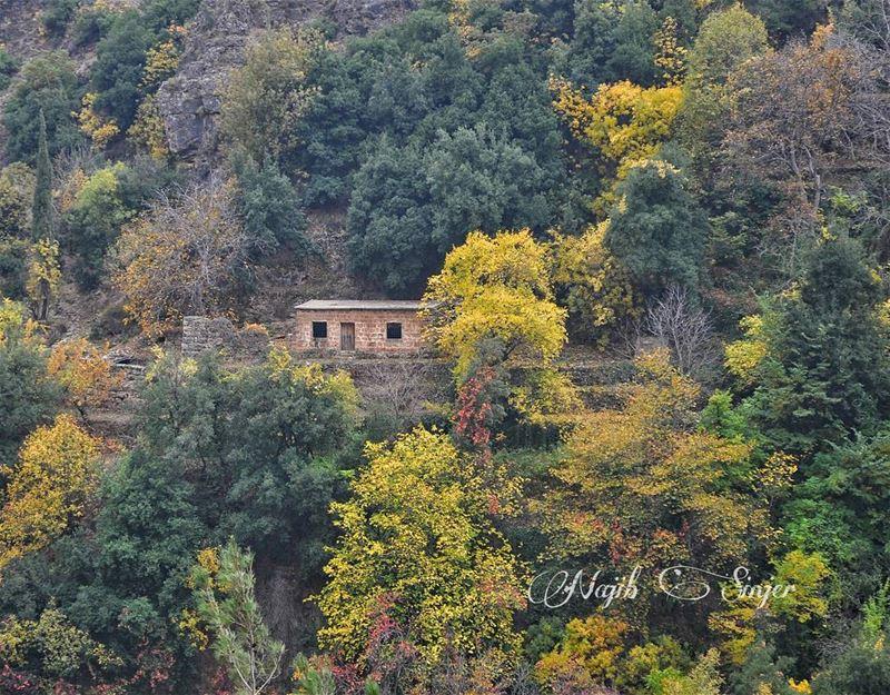 fall fall🍁 winter instagood dead nature lebanon najib_sinjer ... (Kadisha Valley)