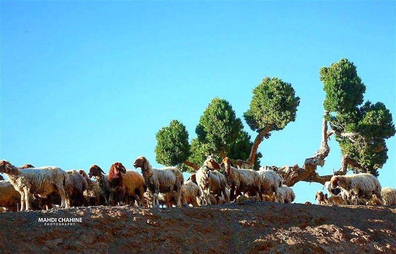 Good morning! jord_elhermel by @mahdichahine.photography Hermel ... (El Hermel, Béqaa, Lebanon)