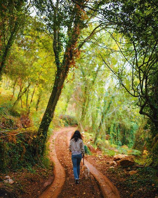 Random walks 🍂