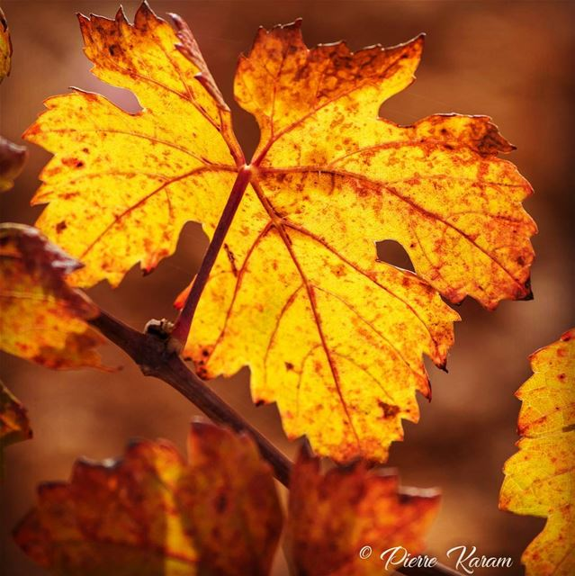 autumn shows us how beautifullIs to let things go yellow leaf sun...