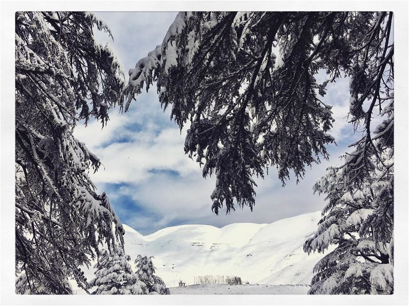 The Cedars and The Mountains are dressed in white Snow Snow ... (Cedars of God)