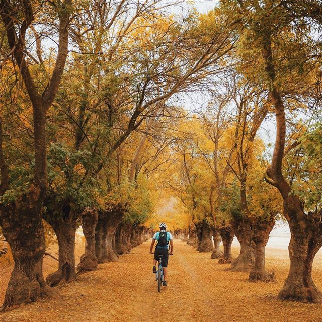 City of trees 🍂Riding with @cyclingcircle @thebikekitchenbeirut (Beqaa Valley)