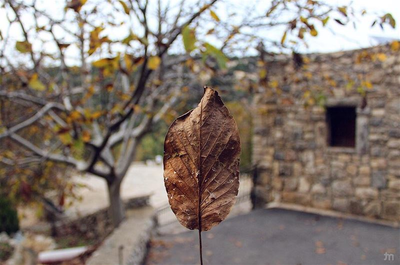 - When Life Get Blurry, Adjust Your FOCUS-... livelovebyblos autumn ... (Mayfouk-Jbeil)