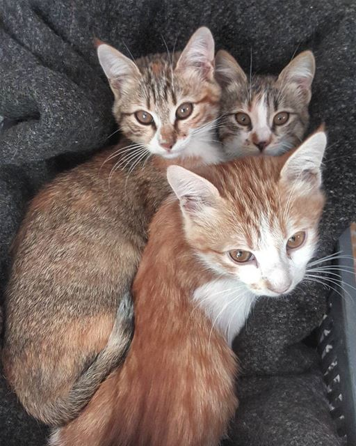 kitty  kittens  cat  cats  catsofinstagram  cats_of_instagram ... (Hasbaya)