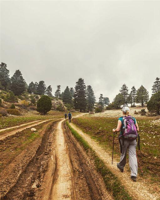 Location : Qamoua Forest, Lebanon earthpix earthofficial ... (Kamouaa)